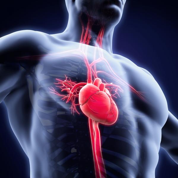 Cardiometabólica