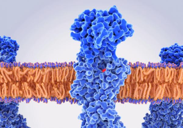 Proton-pump inhibitor